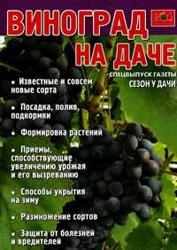 2 виноград на дачі